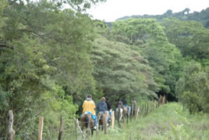 MONTEVERDE HORSEBACK RIDING