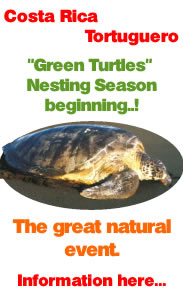 Green Turtles nesting Season