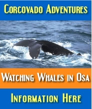 Corcovado Adventures - Watching Whales in Osa