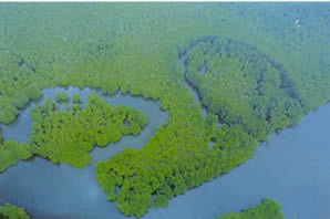 The Corcovado mangrove swamp lies at the mouth of the rivers Llorona and Sirena