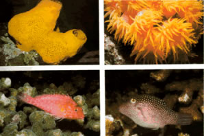 Marine life thrives in the coral reefs at gandoca - manzanillo. Fish, anemones, urchins and sponges amongst others.